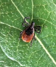 Tick Borne Illness Discussion with Liz Sanderman