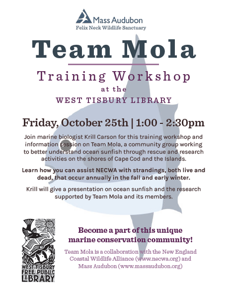Team Mola Training Workshop